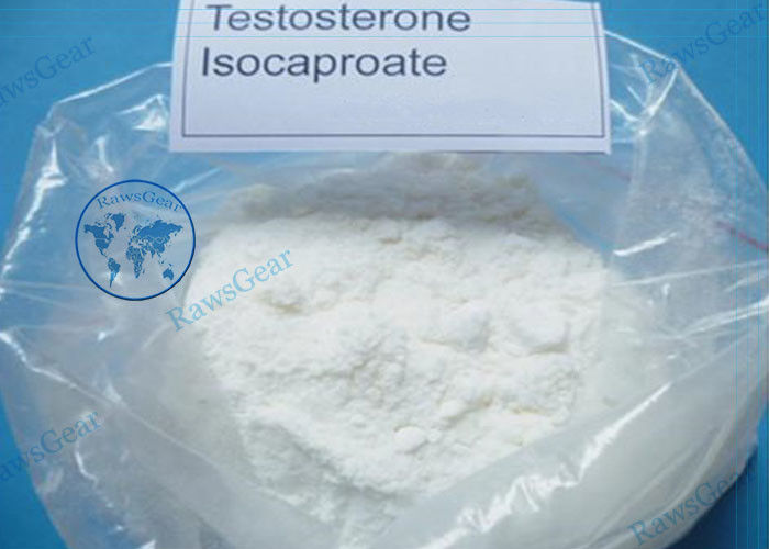 99% Purity Anabolic steroid Testosterone Isocaproate CAS 15262-86-9 For Bodybuilding